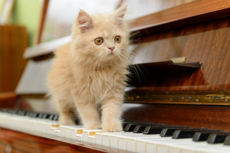 fluffy: esponjoso gatito persa pie en el piano