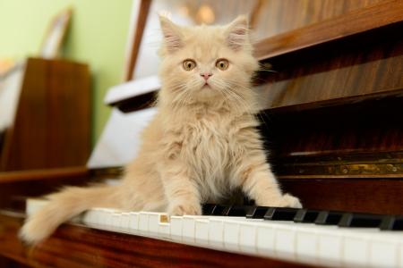 ピアノの上を歩いてふわふわペルシャ子猫