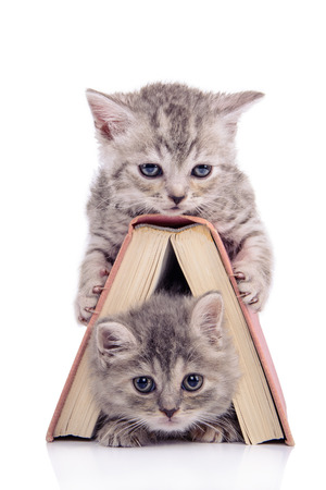 poem: two small striped kittens Scottish tabby breed. animals sitting with a book  isolated on white background Stock Photo