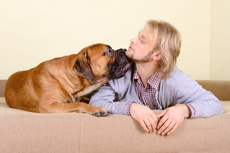 young man at home playing with a big bullmastiff dog. positively laugh photo