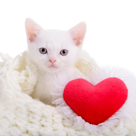 little white kitten with red heart. Valentines Day photo