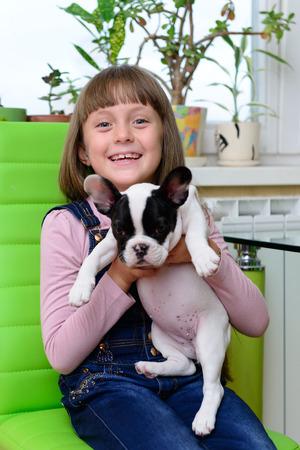 french bulldog puppy: child girl keep small pet a French Bulldog puppy