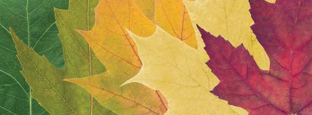 textures: Zusammensetzung der schönen farbigen Blätter im Herbst Nahaufnahme Lizenzfreie Bilder