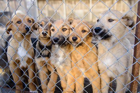 de nombreux chiens errants dans un abri enfermés derrière maille Banque d'images
