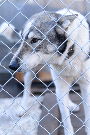 face guard: stray dog in shelter locked behind mesh