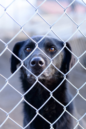 locked: stray dog in shelter locked behind mesh