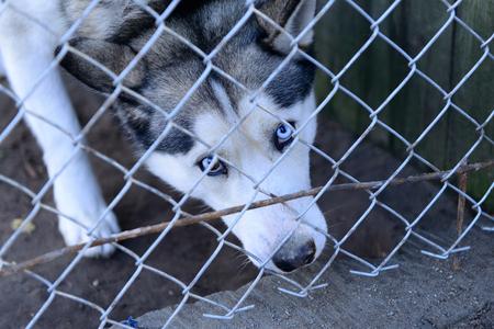 stray dog: stray dog in shelter locked behind mesh