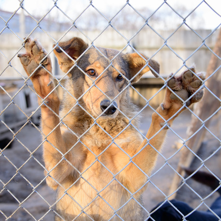 locked up in a cage: stray dog in shelter locked behind mesh