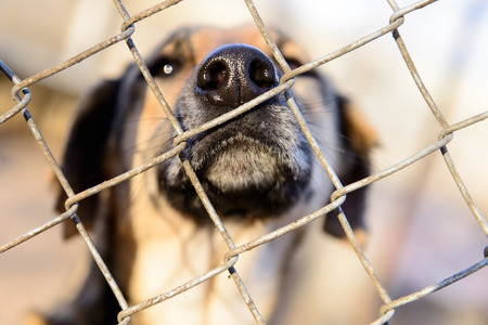 nose close up: stray dog in shelter locked behind mesh nose close up