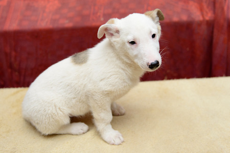 metis: homeless puppy in a shelter for dogs