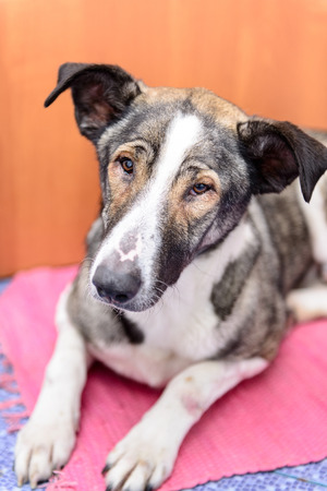 rescued: sick homeless dog with eye disease in a veterinary clinic