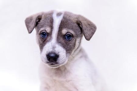 pet portrait theme little white puppy half-breed