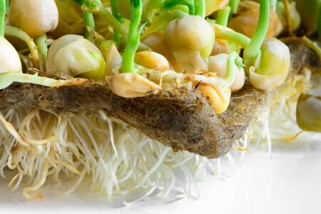 fresh microgreens seeds young pea sprouts and roots healthy eating vegan diet close-up