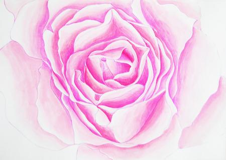 Watercolor rose illustration