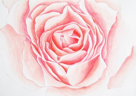 Background with painted rose.