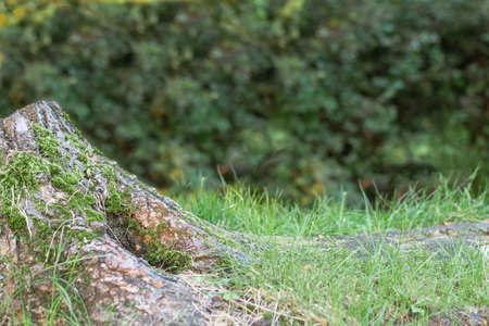 Natural background mockup over blurred green outdoor. Template for design. 免版税图像