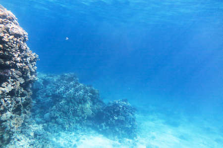Background of underwater landscape with coral reef. Depth of blue sea. Imagens