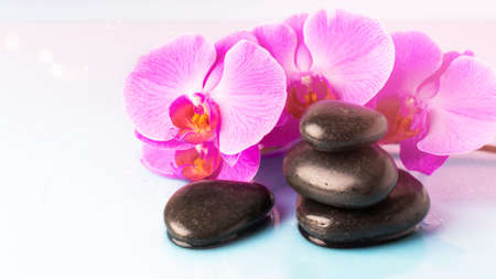 Orchid flower and black pebble spa stones over pink background. Beauty spa composition.