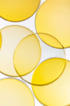 Abstract oil circle bubbles in a petri dish top view. Laboratory cosmetic or medicine background.