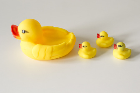 pato real: Row of yellow ducks on white background. Leadership and following concept