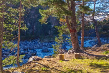 Mountain landscape: campsite, pine trees with a red mark on the banks of a mountainous rocky river and stumps