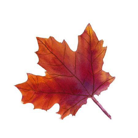 Watercolor realistic maple leaf illustration. Natural hand drawn purple and orange maple leaf, autumn symbol on white background isolated Stockfoto