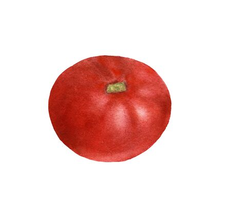 Red ripe fresh tomato watercolor illustration hand-drawn on a white background isolated. Vegeterian and vegan food illustration