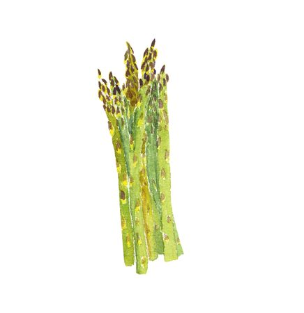 Watercolor illustration of a bunch of asparagus hand-drawn on a white background, isolated. Vegeterian and vegan food illustration Imagens