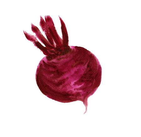 Watercolor realistic illustration of a beet root, hand-drawn, on a white background, isolated. Vegeterian food illustration