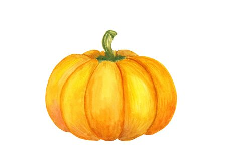 Bright watercolor hand-drawn pumpkin illustration on a white background, isolated. Vegeterian and vegan food illustration Imagens