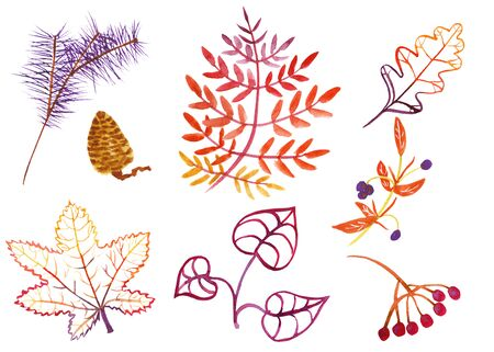 Set of watercolor autumn leaves and fruits, berries, cones, pine twigs in purple, orange, red, yellow, violet colors, on a white background, hand-drawn, isolated Banco de Imagens