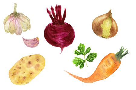 Set of seasonal watercolor vegetables and roots hand-drawn isolated on a white background: potatoes, carrots, beets, onions, garlic, parsley