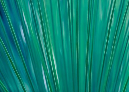 Abstract turquoise background of a tropical palm leaf. Lines and shadows. Green natural juicy background. Striped organic background with free space for text
