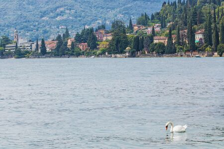 Lake Garda, Italy. Town on Lake Garda. Swan on the water surface of the lake. Elegant white swan.