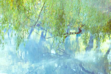 Soft light green background. Natural background of leaves. Hanging branches of weeping willow tree and water surface