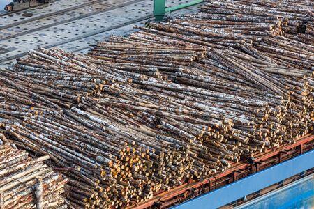 Birch timber. Loading of logs in the port. Transportation of lumber. Deforestation. Destruction of natural resources