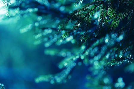 Blue background with fir tree branches, lights and flares. Forest dusk wallpaper. Evergreen coniferous garden tree. Perfect for Christmas and New Year design with free space for text