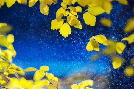 Autumn blue background. Bright gold colored and yellow leaves. Magic light bokeh flares and rain drops. Seasonal wallpaper. Free space for text