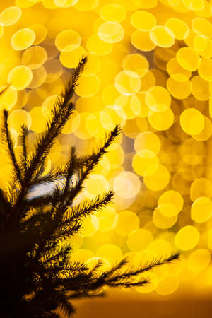 Magic Christmas background with lights and flares and silhouette of fir tree branches. Abstract yellow background. Perfect for Christmas and New Year design