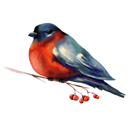 Bullfinch on a branch illustration. Isolate.