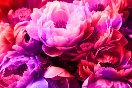 Peonies with neon light. Background for Valentines day.