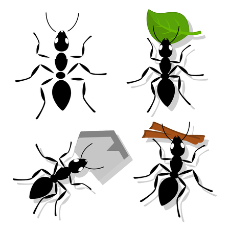Set of ant with separate parts, with leaf, branch and pebble on white.