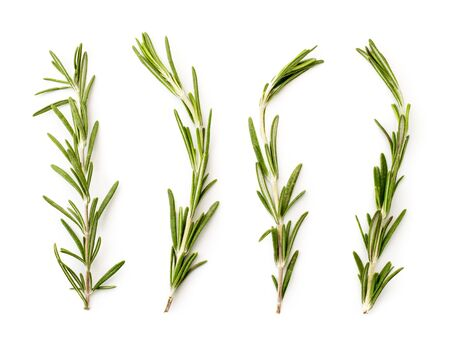 Four branches of rosemary on a white. The view of the top. 免版税图像
