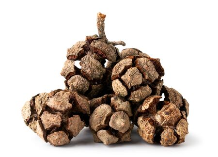 Pile of cypress cones on a white, isolated.