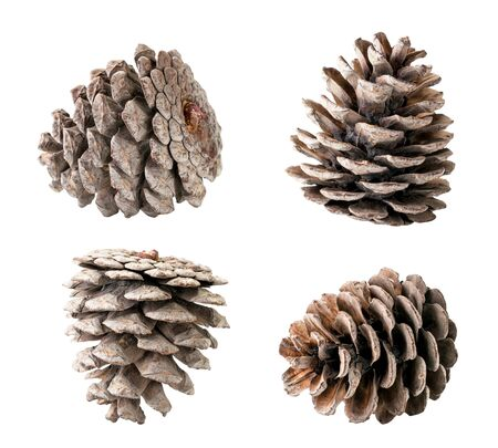Set of Christmas tree cones closeup on a white background isolated.