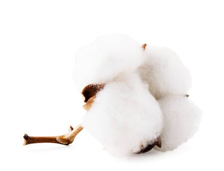 Cotton Bud close up on a white. Isolated