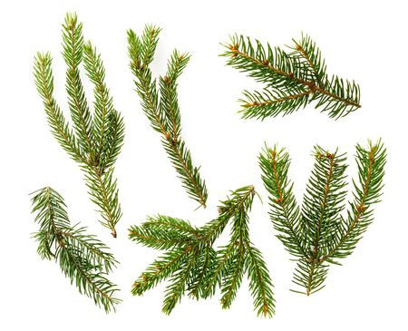 Set of Christmas tree branches on a white. The view of the top.