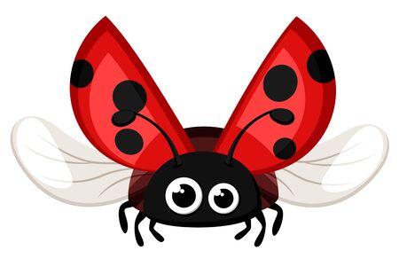 Marienkäfer-Nahaufnahme, fliegen auf weißem Hintergrund. Insekt