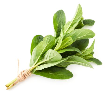 Mint tied in a bunch on a white background. The view from top