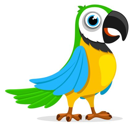 A multi-colored parrot stands on a white background. Exotic bird